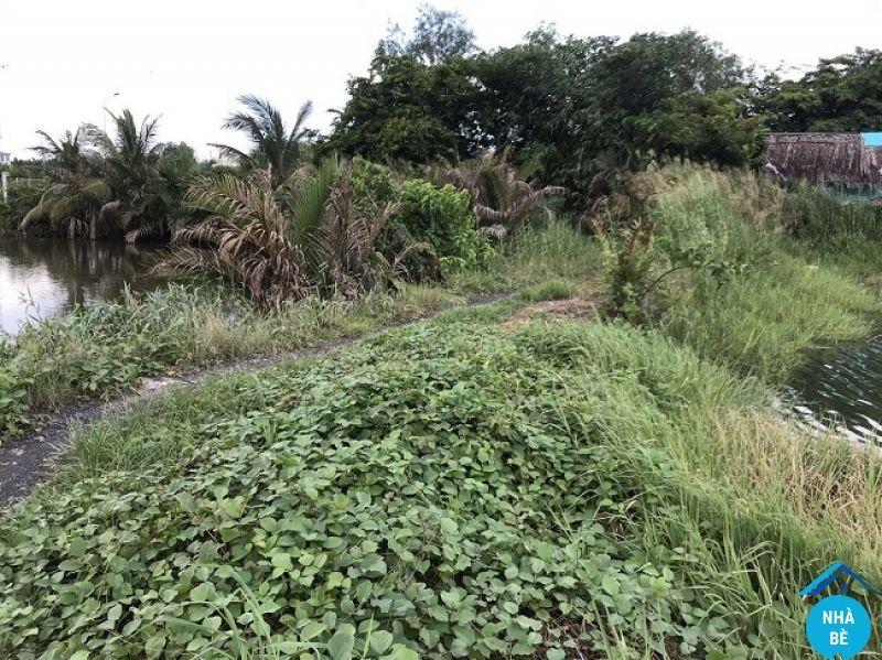 Bán đất nông nghiệp xã Nhơn Đức huyện Nhà Bè