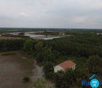 Bán đất lúa Phước Vĩnh Đông Cần Giuộc 1500m2